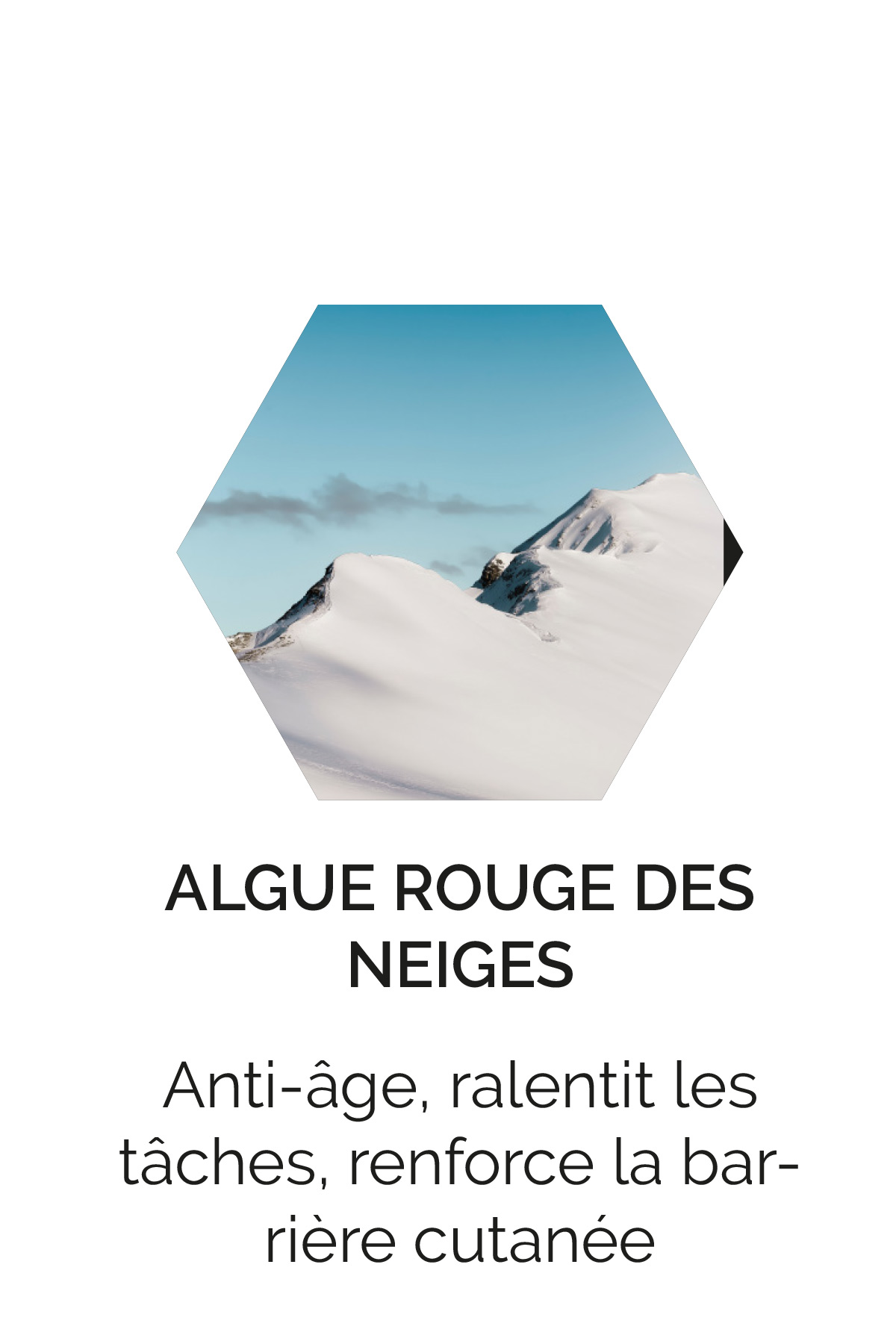 Algue rouge des neiges