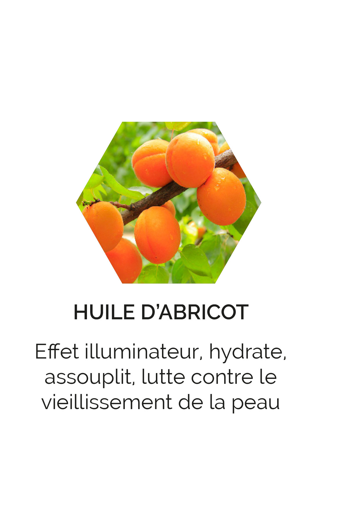 Huile d'abricot