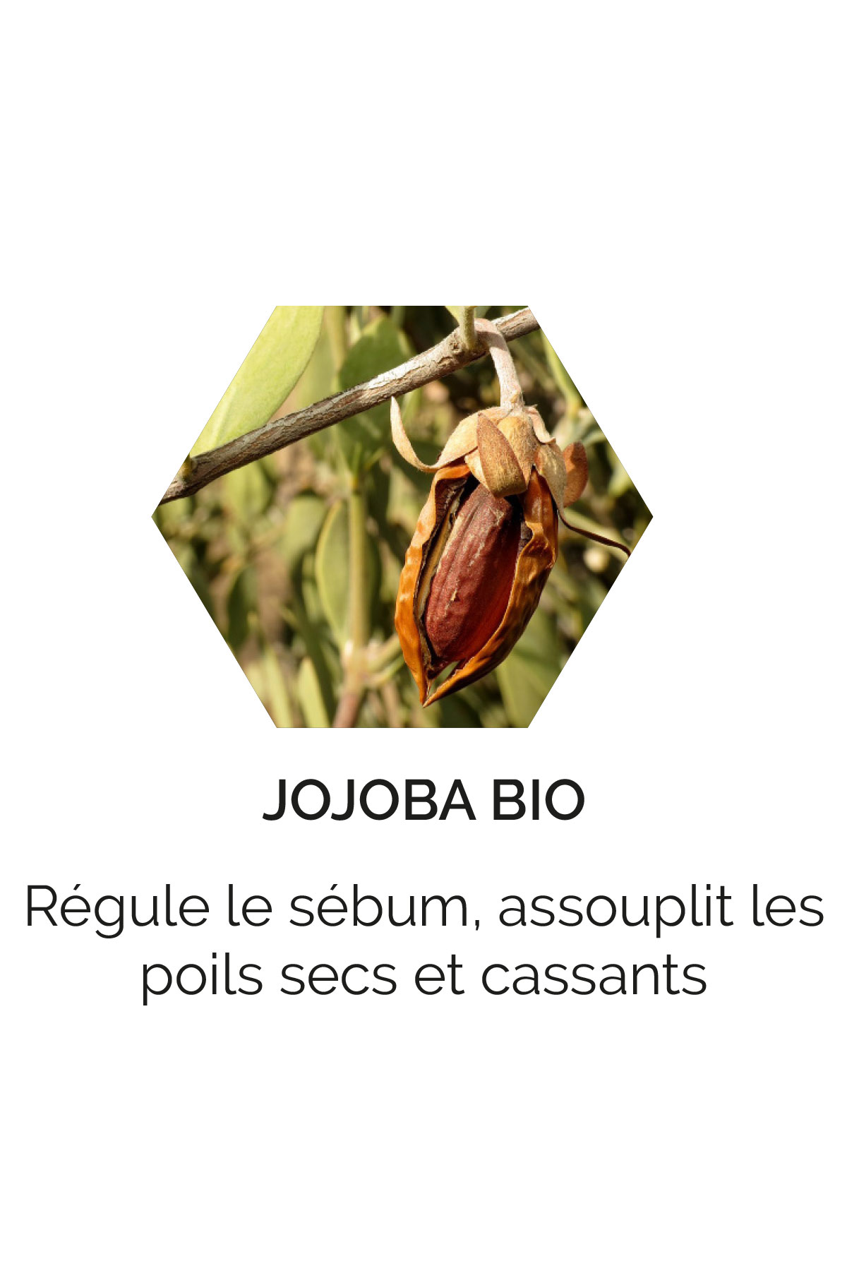 Jojoba bio