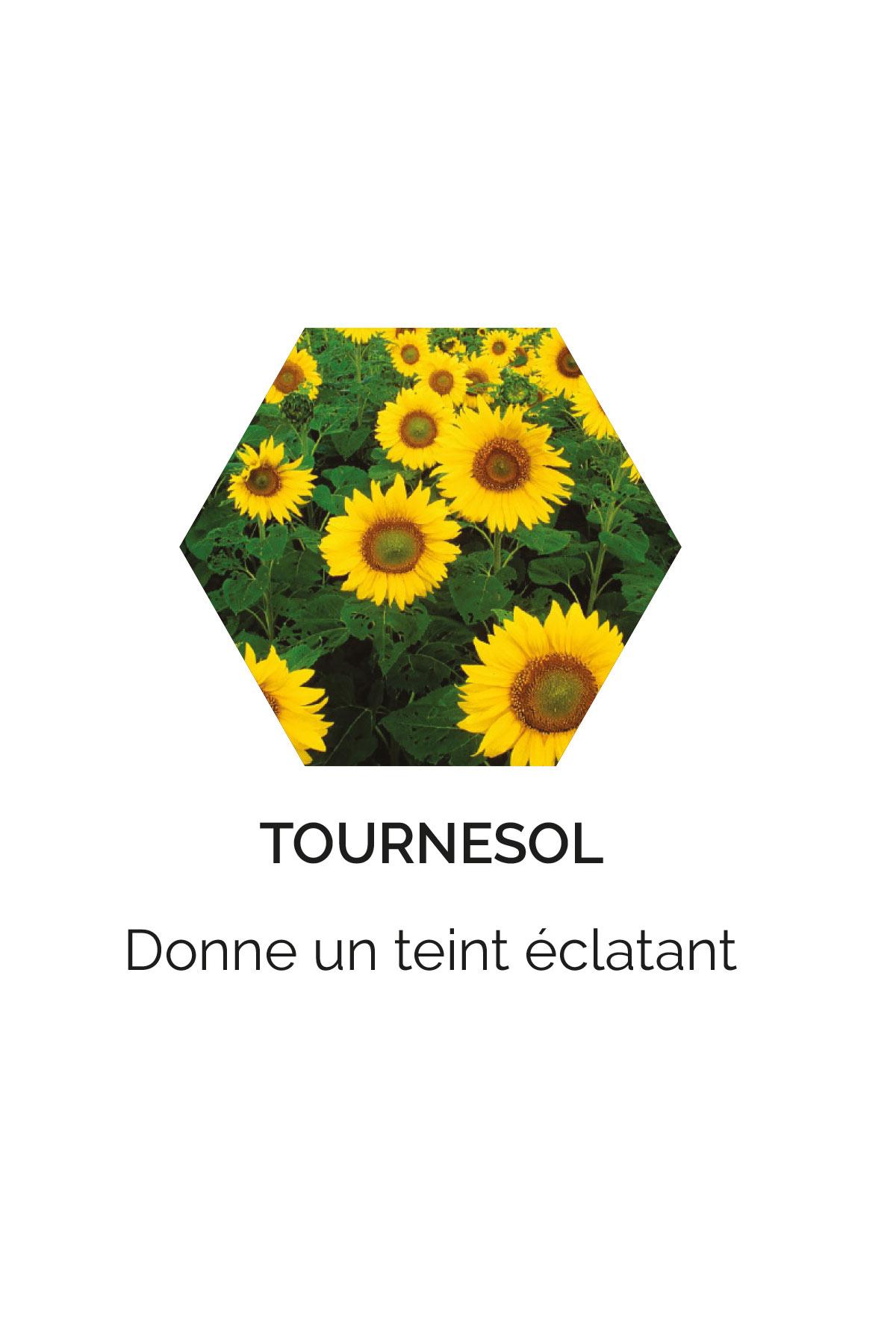 Tournesol